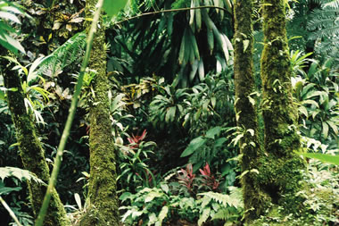 "Rainforest vegetation on the Caribbean island of Dominica. <a href=""/earth/rainforest.html&edu=elem"">Tropical