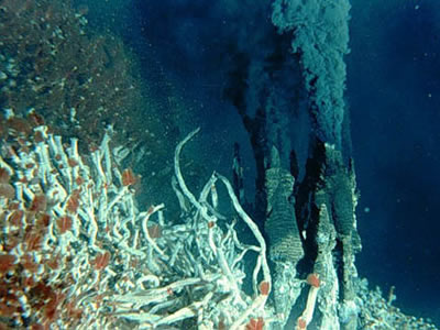Hydrothermal vents in the deep ocean are located at tectonic <a