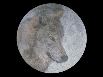 "The Full Moon in January is called the Wolf Moon. It is named after the hungry packs of wolves that howled at night.  The Algonquian tribes of Native Americans had <a href=""/earth/moon/full_moon_names.html&edu=high&dev="">many different names</a> for the Full Moon through the year, reflecting their connection with nature and the <a href=""/the_universe/uts/seasons1.html&edu=high&dev="">seasons</a>, hunting, fishing, and farming.<p><small><em>Image courtesy of Windows to the Universe</em></small></p>"