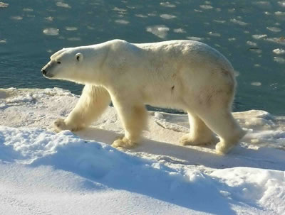 Roaming across Arctic <a