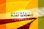 Secrets of Plant Genomes Revealed